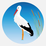 Stork. Stock Photography