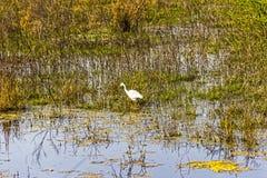 Stork at a lake in the Keolado National Park Stock Photo