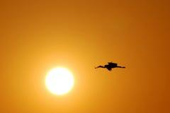 Stork. Leading to a stork nest at sunset vector illustration