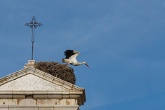 A stork leaving the nest on top of a monument in Faro, Algarve, Portugal. Some motion blur Royalty Free Stock Photo