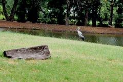 Stork and log Stock Photos