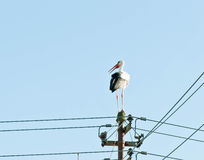 Stork. The stork looks after a place for a nest Stock Photo