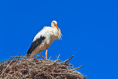 Stork - Morocco Royalty Free Stock Photos