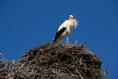 Stork - Morocco Royalty Free Stock Images