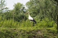 A stork Stock Photo