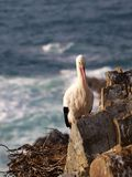 Stork near the sea Stock Photography