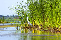 Stork near to the river Stock Photography