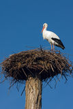 Stork in the nest. Against blue sky Royalty Free Stock Photos