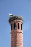 Stork in nest Royalty Free Stock Photos