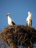 STORK NEST. And two storks Stock Photo