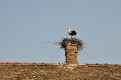 Stork in nest Royalty Free Stock Image