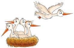 Stork Nest Stock Images