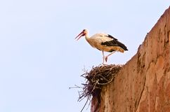 Stork in the nest Royalty Free Stock Image