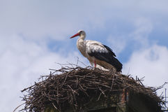 Stork on a nest Stock Photography