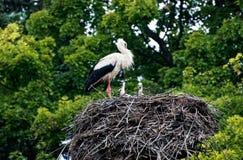 The stork nest Royalty Free Stock Image