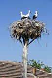Stork nest Royalty Free Stock Image