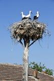 Stork nest Royalty Free Stock Image