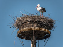 Stork-Nest Royalty Free Stock Images