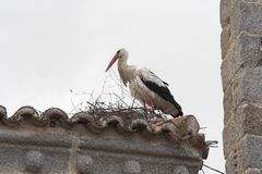Stork nest. Stork in the nest stock images