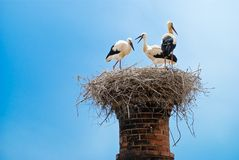 Free Stork Nest Stock Photography - 9749882