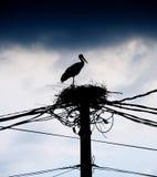 Stork nest Stock Photography