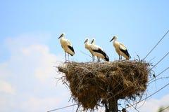 Stork on the nest. Against blue sky Stock Images