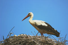 Stork in the nest stock photos