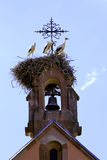 Stork on the nest in Alsace Stock Image