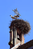 Stork on the nest in Alsace Stock Photos