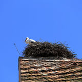 Stork on the nest in Alsace Royalty Free Stock Photos