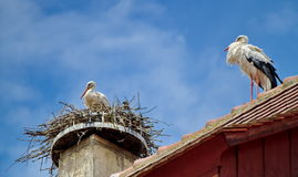 Stork in a nest and another walking on the roof Royalty Free Stock Photos