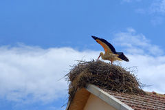 Stork in a nest Stock Photo