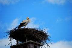 Stork on a nest Royalty Free Stock Images