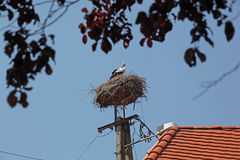 The Stork in the nest. On blue sky Royalty Free Stock Photos