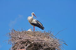 Stork in the nest and blue sky in background Stock Photos