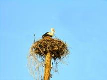 Stork in nest on blue sky background. White stork in the nest on a pole on the background of azure sky Stock Photos