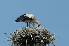 Stork in the nest with the children Stock Photo