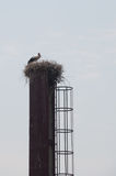 Stork in the nest on the chimney Stock Photo