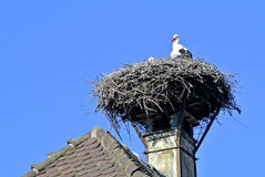 Stork in a nest Stock Photos