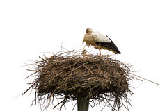 Stork nest Stock Photos
