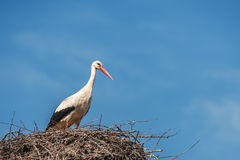 Stork Royalty Free Stock Photography