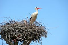 Stork on the nest. copy spaces. World peace concept royalty free stock photos