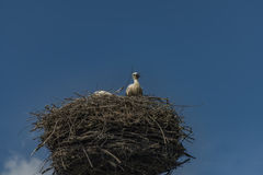 Stork on nest with dark blue sky Royalty Free Stock Images