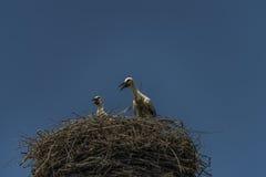 Stork on nest with dark blue sky Royalty Free Stock Photo