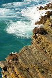 Stork nest at the edge of the cliff, Cabo Sardao, Alentejo, Port. Ugal Royalty Free Stock Image