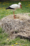 Stork nest on the farm in rural location with eggs Royalty Free Stock Images