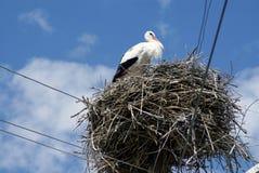 Stork on nest stock images