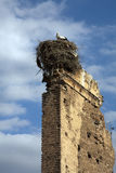 Stork Nest, Marrakech, Morocco Royalty Free Stock Images