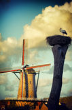 Stork nest next to traditional Holland mill Stock Images