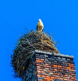 Stork nest on old factory chimney in famous village Ribbeck, near Berlin Royalty Free Stock Photography